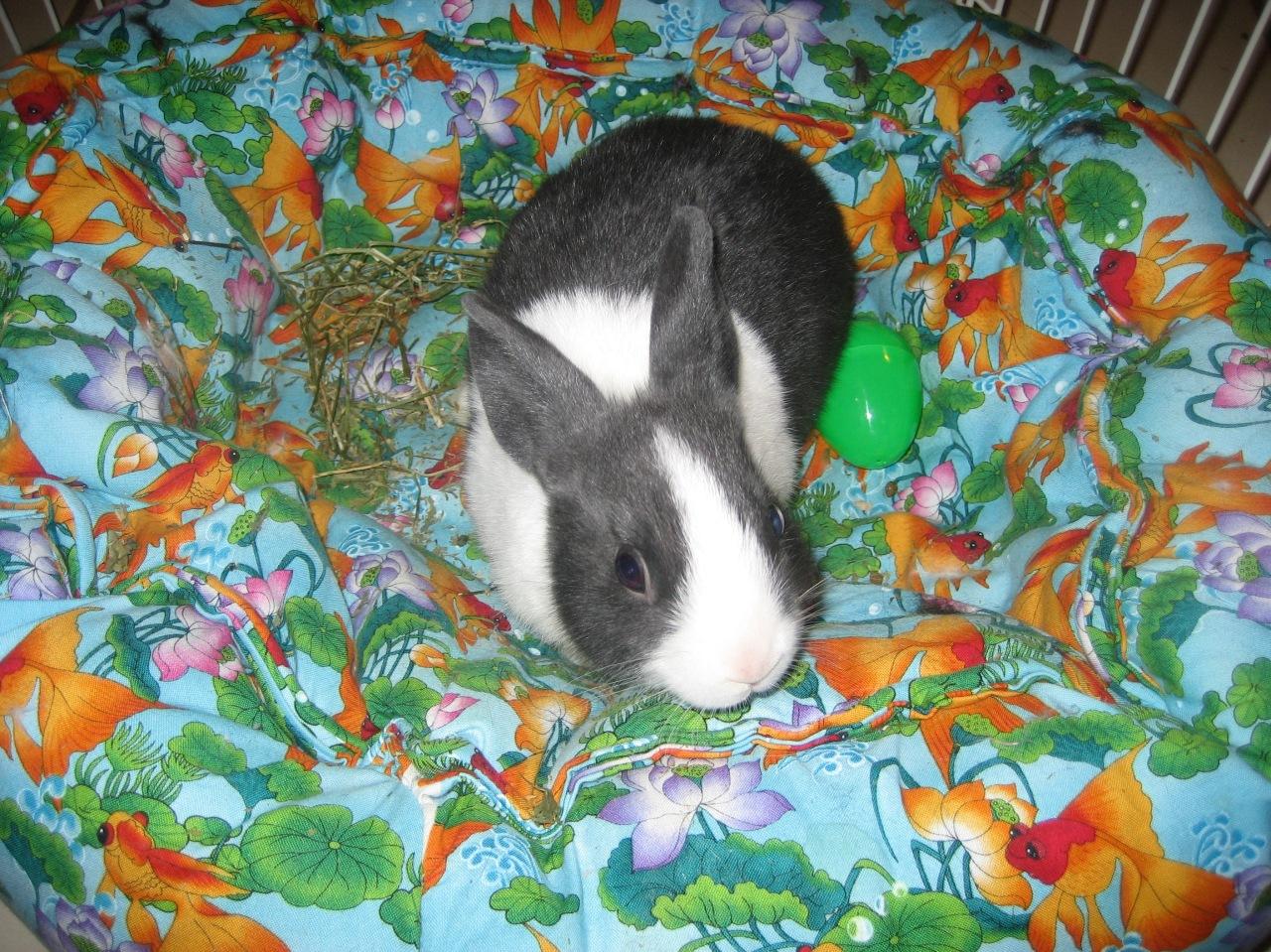 My bunny, Gizmo
