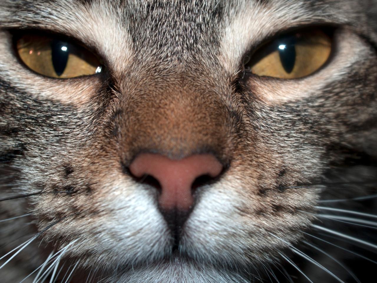 Cat Macro