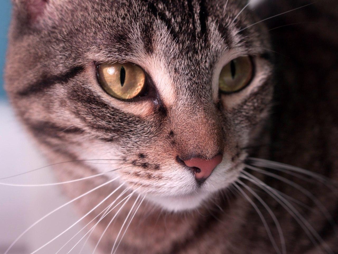 My cat, Boston