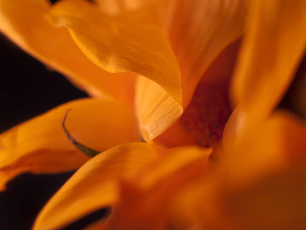 Macro of a yellow flower