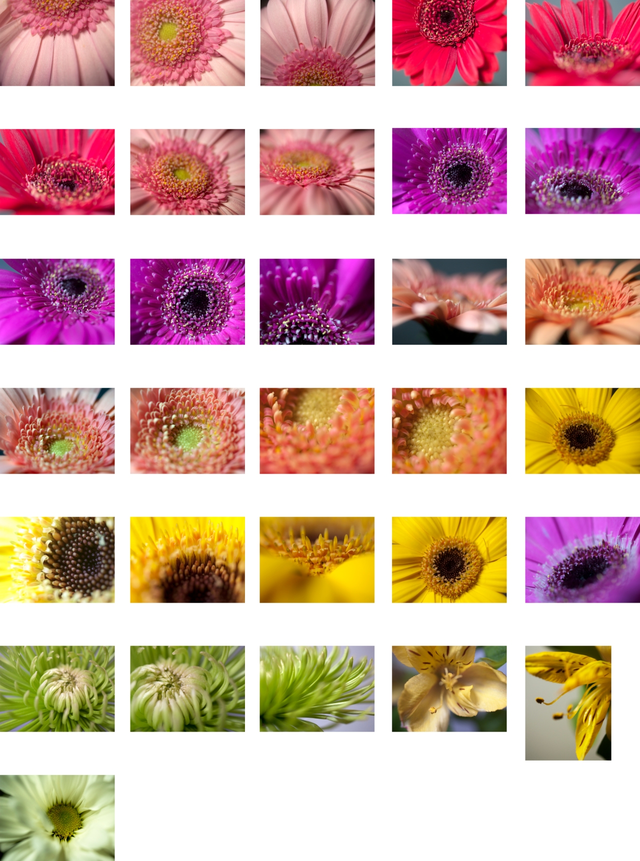 365 Days of Flowers: August Overview
