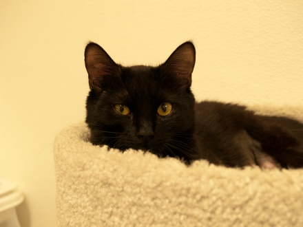 Black Cats Need Love Too