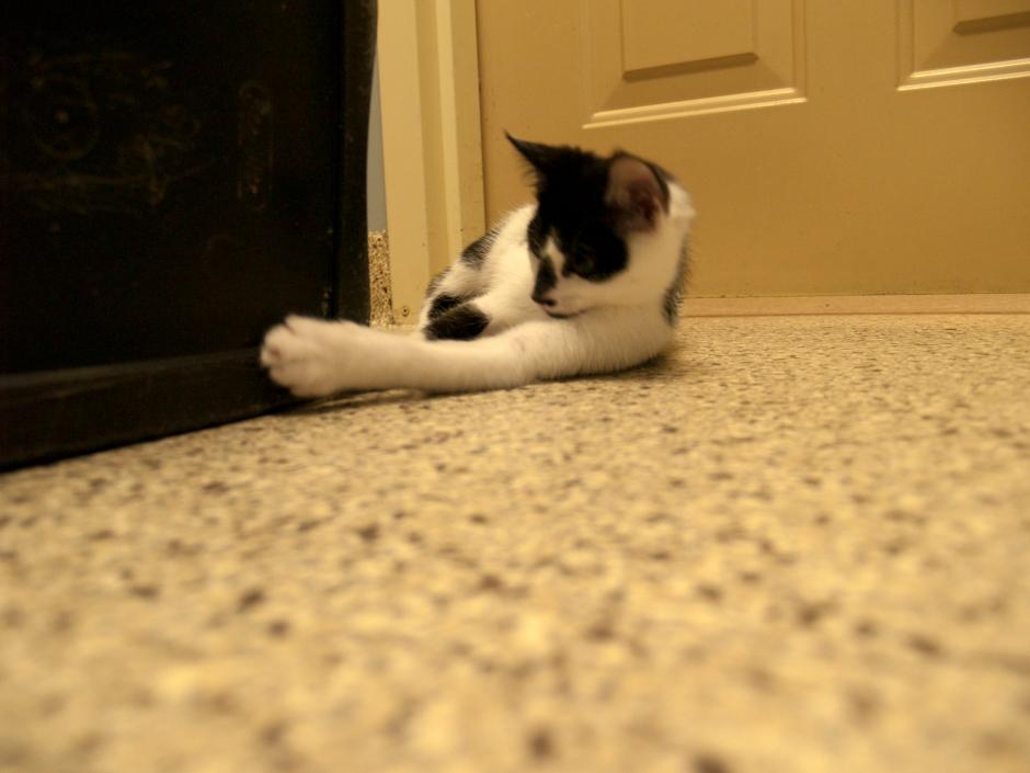 Grove Street Kittens from Scituate Animal Shelter
