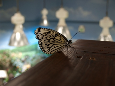 Long Island Aquarium Butterfly