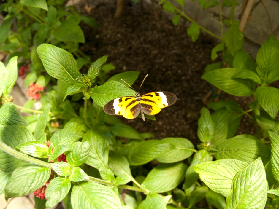 Long Island Aquarium Butterfly