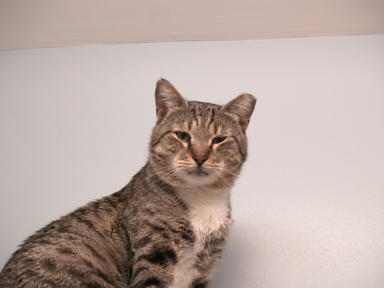 Scituate Animal Shelter