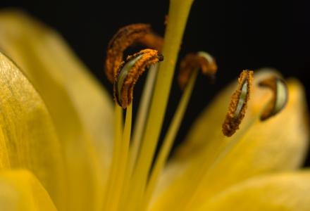 Pollen Everywhere